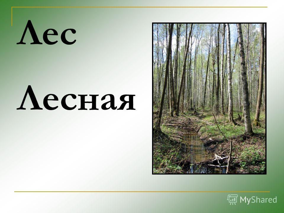 Лес Лесная