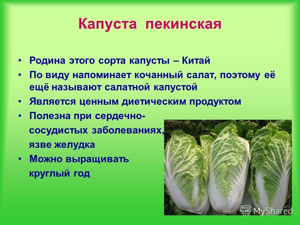 Капуста пекинская Родина этого сорта капусты – Китай По виду напоминает кочанный салат, поэтому её ещё называют салатной капустой Является ценным диетическим продуктом Полезна при сердечно- сосудистых заболеваниях, язве желудка Можно выращивать кругл