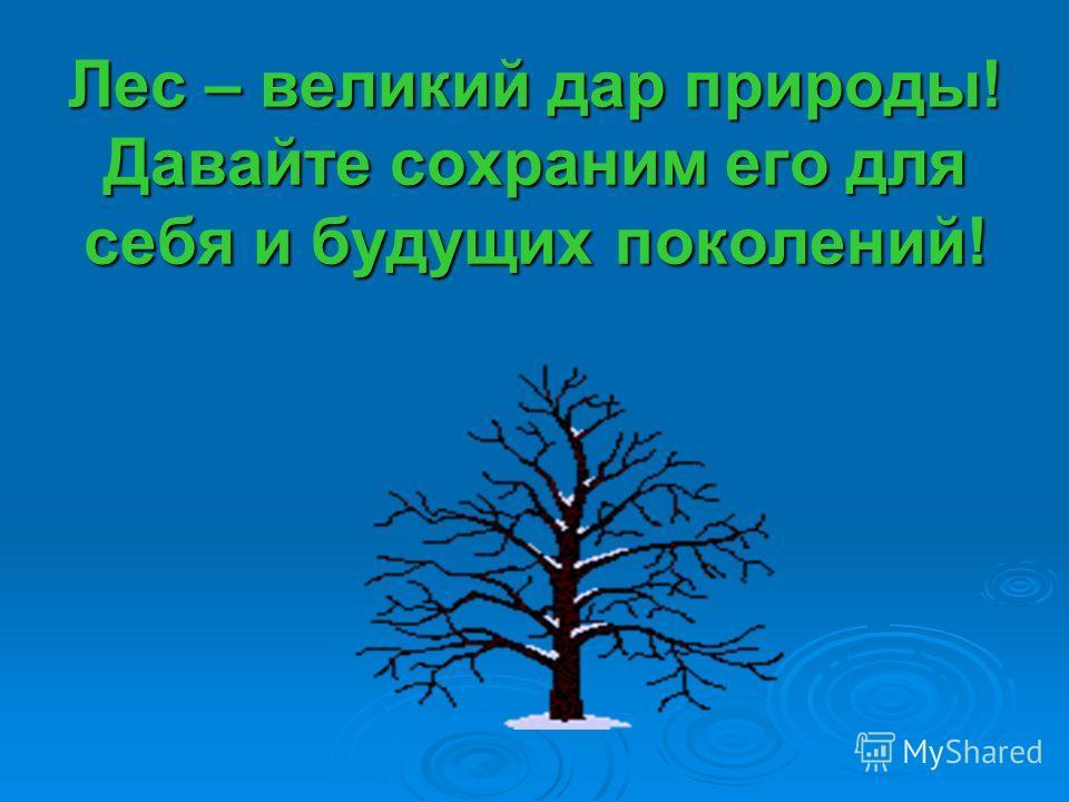 Лес – великий дар природы! Давайте сохраним его для себя и будущих поколений!
