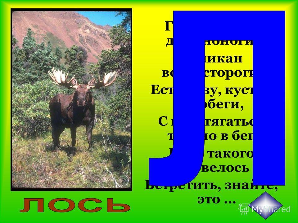Этот зверь с двумя клыками, С очень мощными ногами И с лепешкой на носу. Роет землю он в лесу.