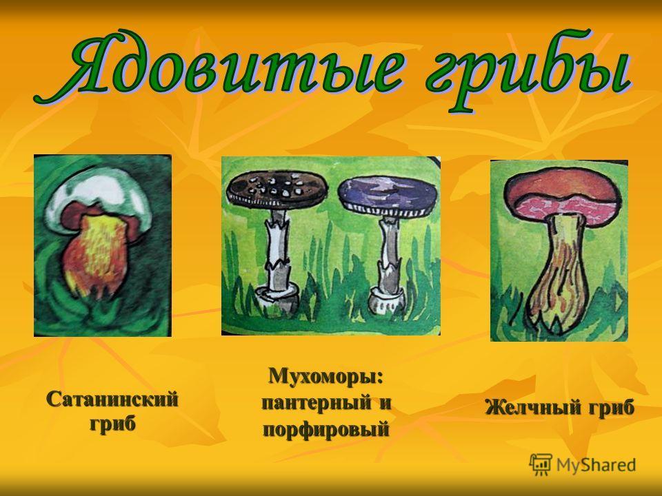 Сатанинский гриб Желчный гриб Мухоморы: пантерный и порфировый