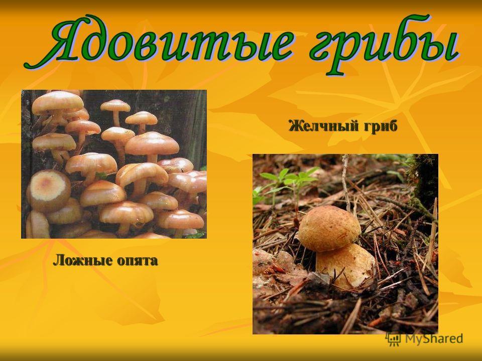 Ложные опята Желчный гриб