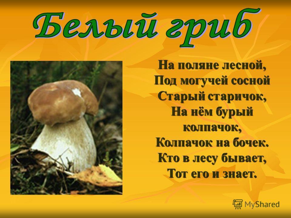 На поляне лесной, Под могучей сосной Старый старичок, На нём бурый колпачок, Колпачок на бочек. Кто в лесу бывает, Тот его и знает.
