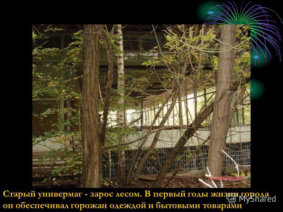 Старый универмаг - зарос лесом. В первый годы жизни города он обеспечивал горожан одеждой и бытовыми товарами