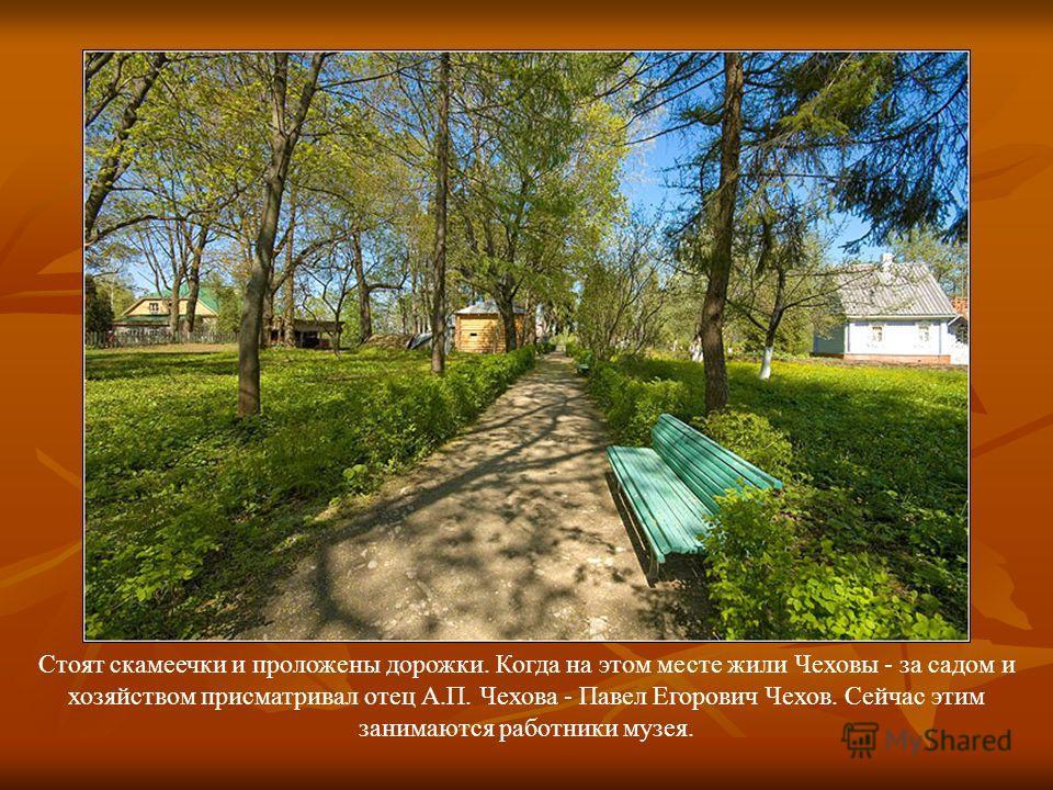 Стоят скамеечки и проложены дорожки. Когда на этом месте жили Чеховы - за садом и хозяйством присматривал отец А.П. Чехова - Павел Егорович Чехов. Сейчас этим занимаются работники музея.