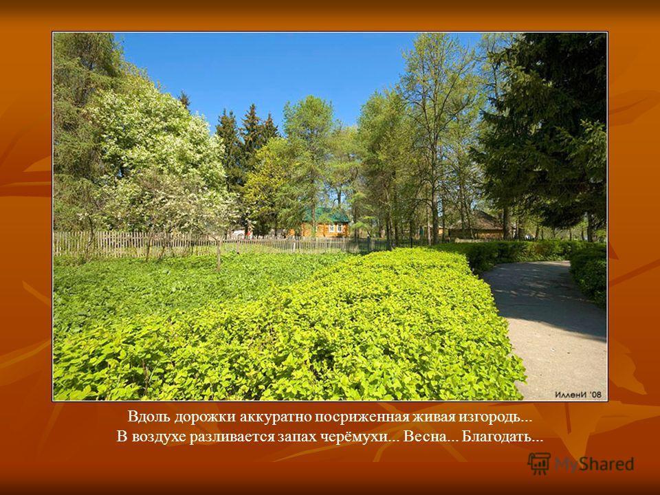 Вдоль дорожки аккуратно посриженная живая изгородь... В воздухе разливается запах черёмухи... Весна... Благодать...
