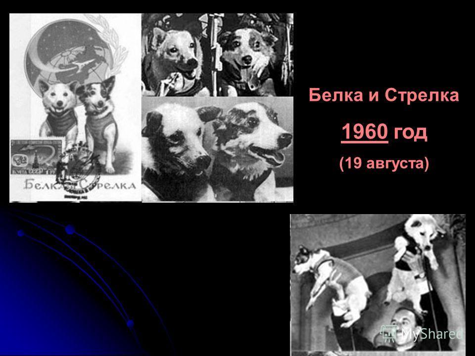 Белка и Стрелка 1960 год (19 августа)