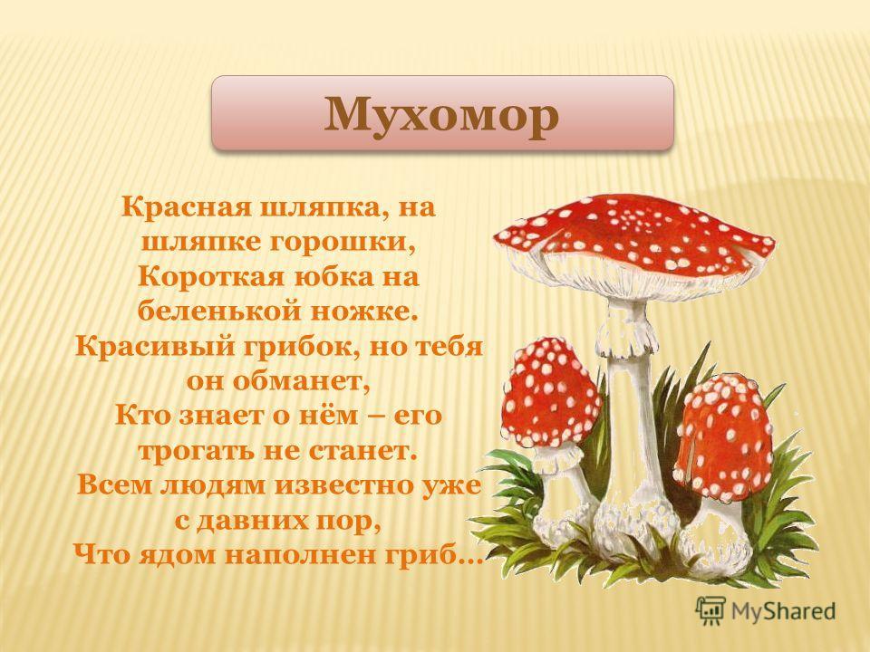 Очень дружные сестрички, ходим в рыженьких беретах, Осень в лес приносим летом, Золотистые ….. Лисички