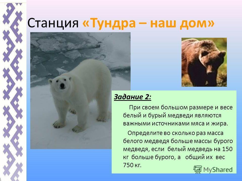 Станция «Тундра – наш дом» Задание 2: При своем большом размере и весе белый и бурый медведи являются важными источниками мяса и жира. Определите во сколько раз масса белого медведя больше массы бурого медведя, если белый медведь на 150 кг больше бур