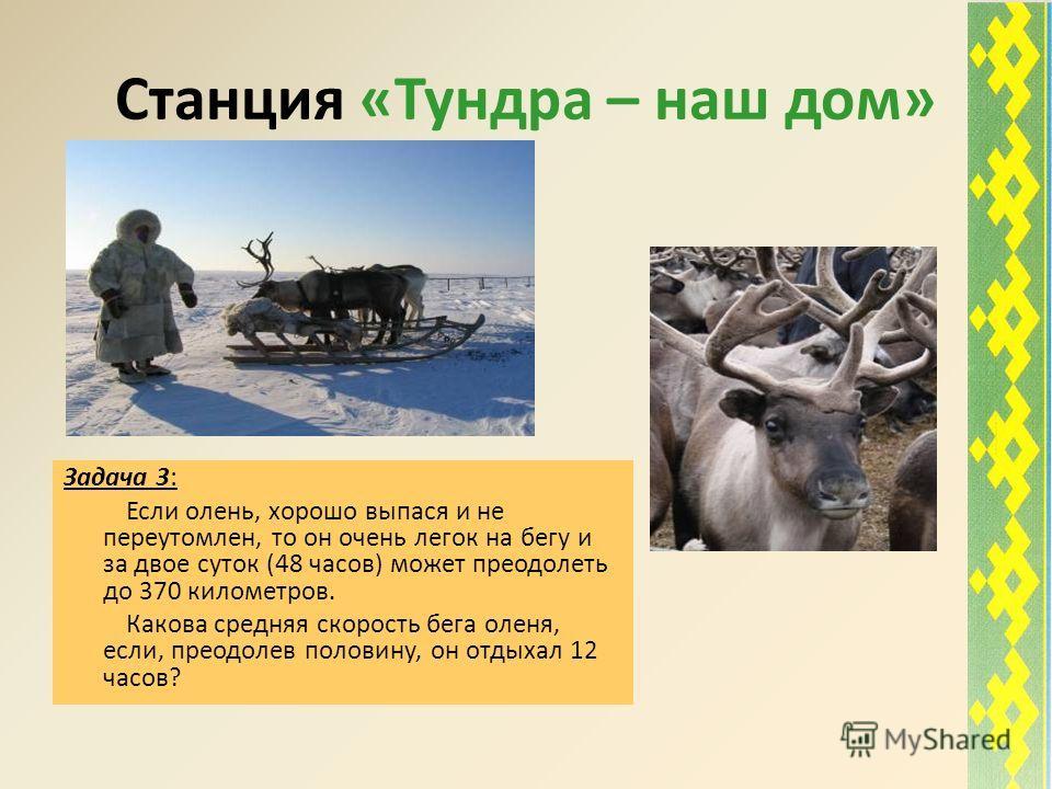Станция «Тундра – наш дом» Задача 3: Если олень, хорошо выпася и не переутомлен, то он очень легок на бегу и за двое суток (48 часов) может преодолеть до 370 километров. Какова средняя скорость бега оленя, если, преодолев половину, он отдыхал 12 часо