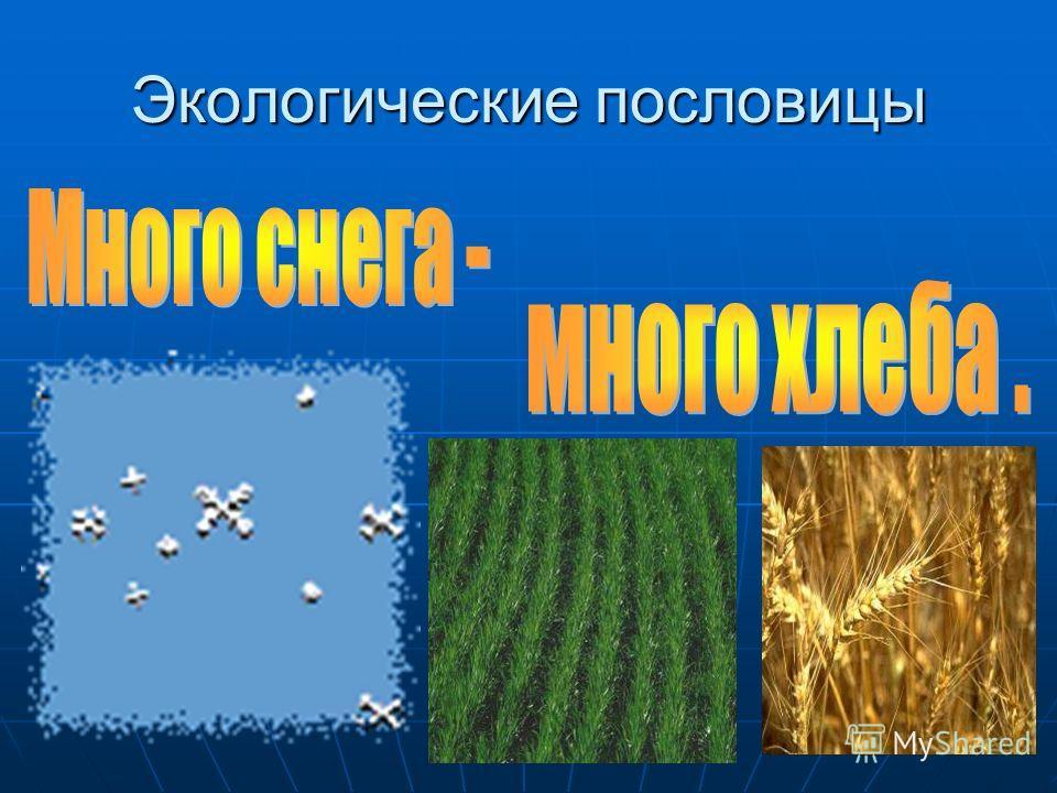 Экологические пословицы