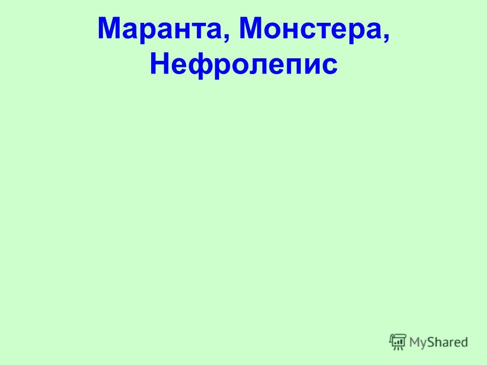 Маранта, Монстера, Нефролепис