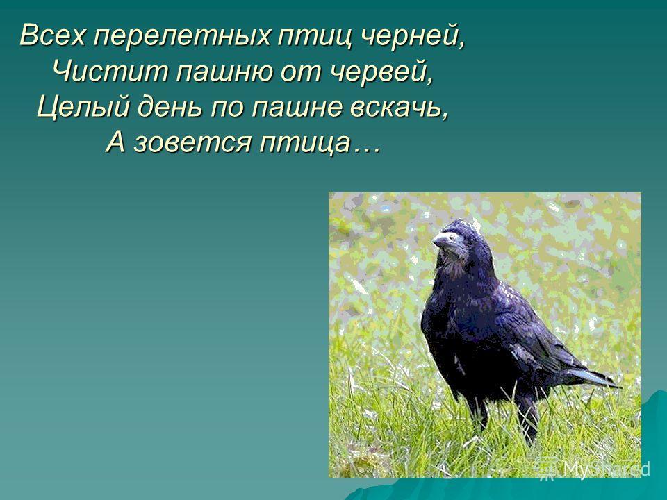 Всех перелетных птиц черней, Чистит пашню от червей, Целый день по пашне вскачь, А зовется птица…