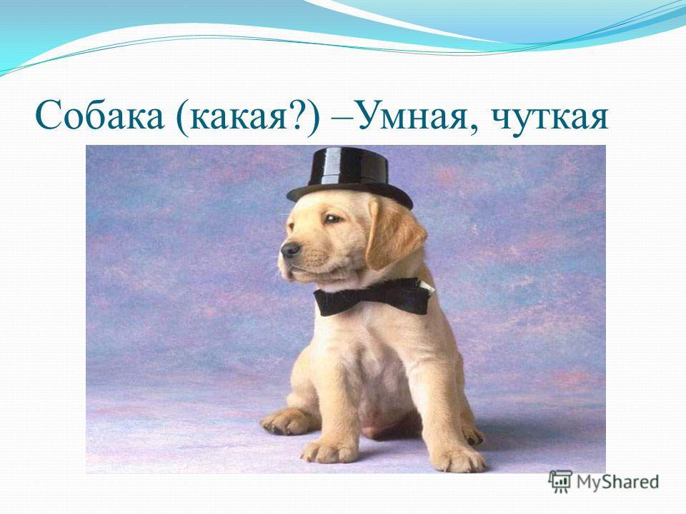 Собака (какая?) –Умная, чуткая