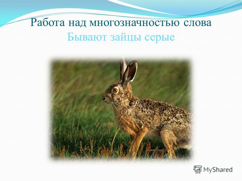 Работа над многозначностью слова Бывают зайцы серые