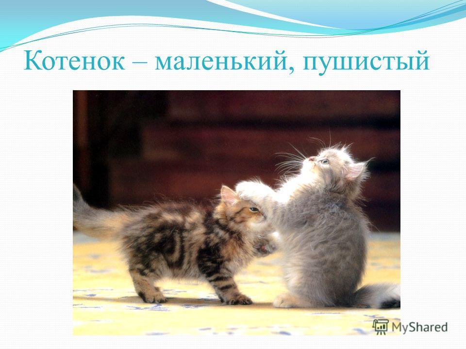 Котенок – маленький, пушистый