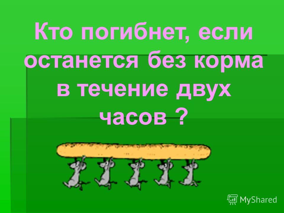 Кто погибнет, если останется без корма в течение двух часов ?
