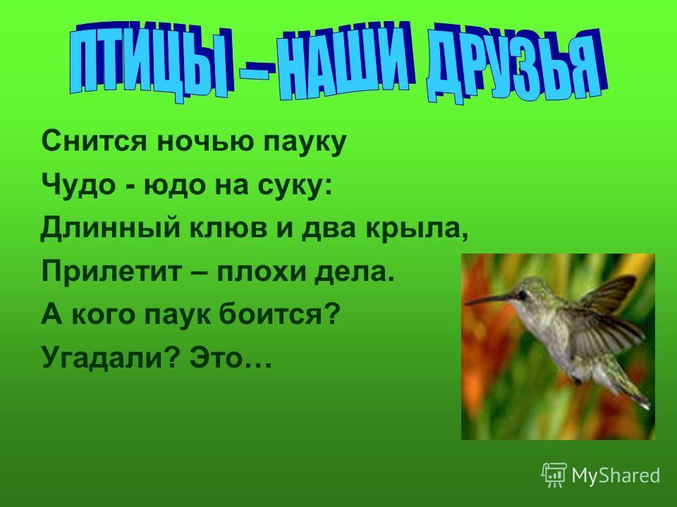 Снится ночью пауку Чудо - юдо на суку: Длинный клюв и два крыла, Прилетит – плохи дела. А кого паук боится? Угадали? Это…