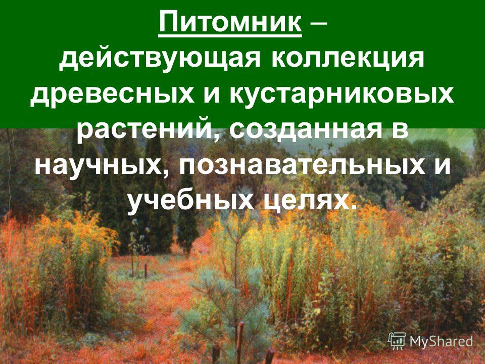 Питомник – действующая коллекция древесных и кустарниковых растений, созданная в научных, познавательных и учебных целях.