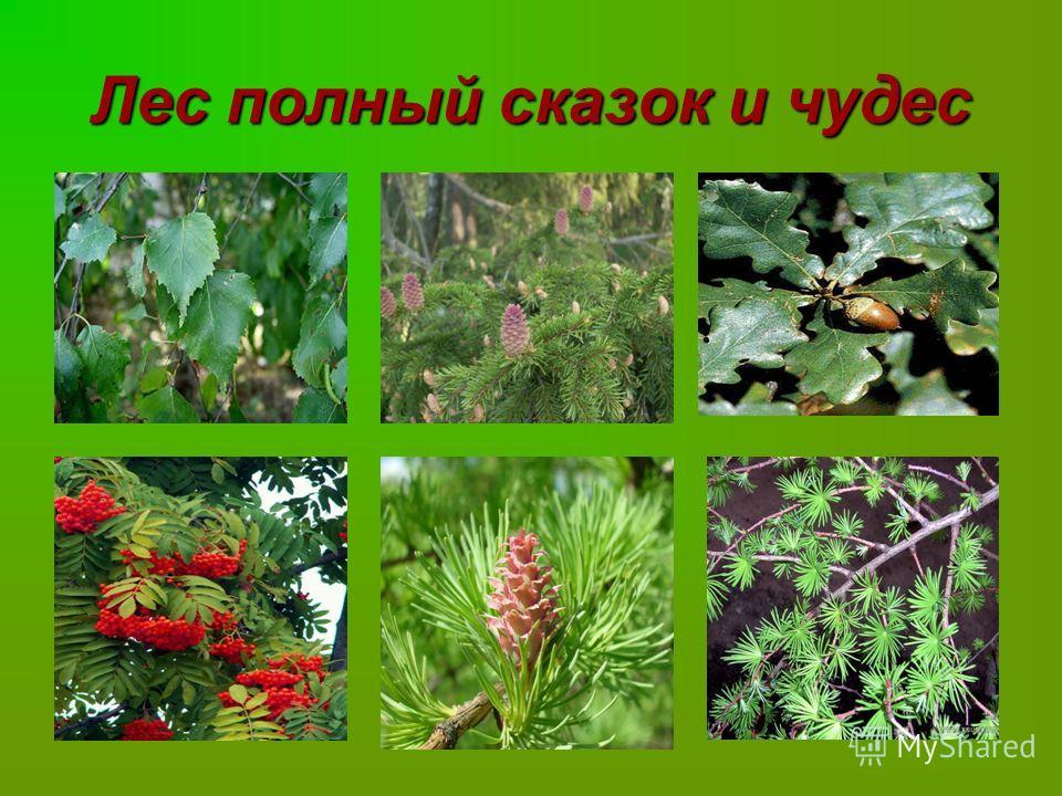 Лес полный сказок и чудес
