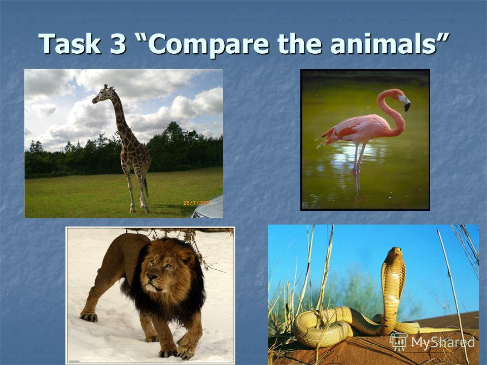 Task 3 Compare the animals