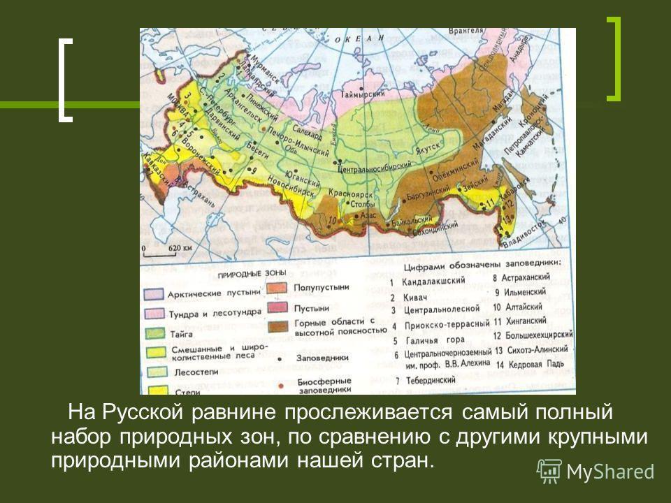 На Русской равнине прослеживается самый полный набор природных зон, по сравнению с другими крупными природными районами нашей стран.
