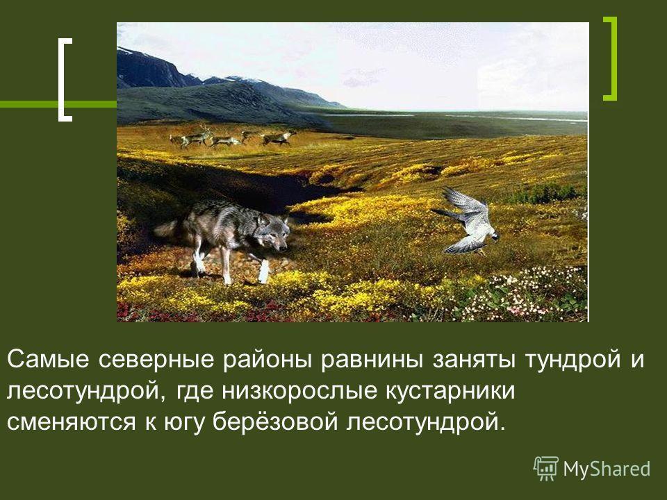 Самые северные районы равнины заняты тундрой и лесотундрой, где низкорослые кустарники сменяются к югу берёзовой лесотундрой.