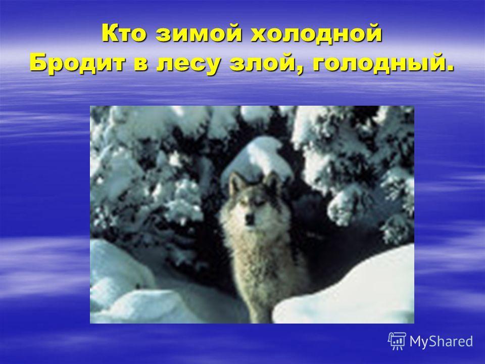 Кто зимой холодной Бродит в лесу злой, голодный.
