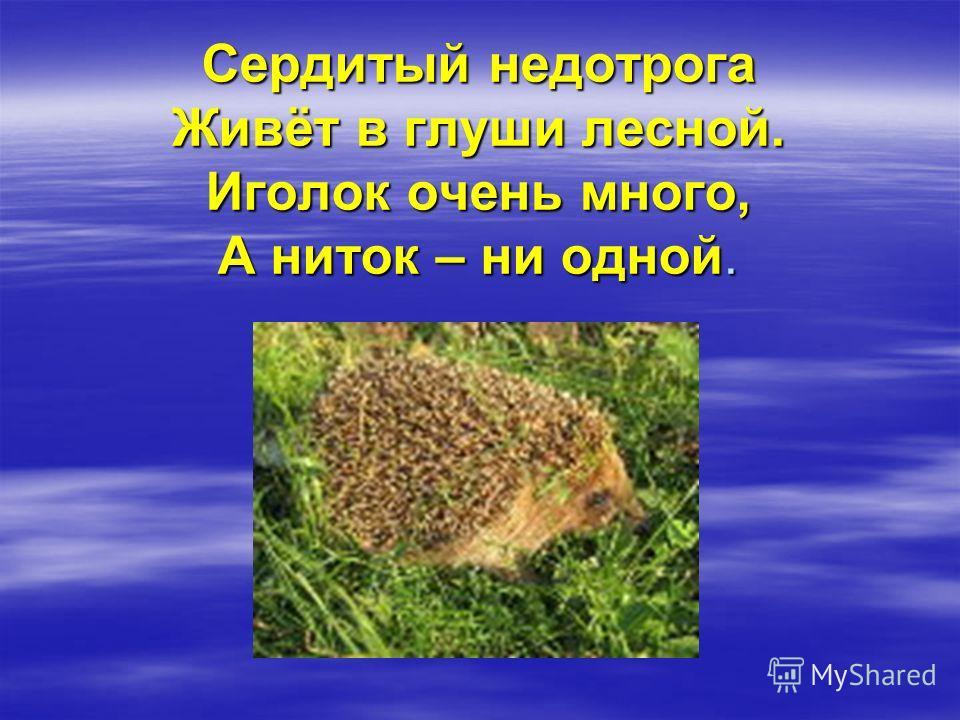 Сердитый недотрога Живёт в глуши лесной. Иголок очень много, А ниток – ни одной.