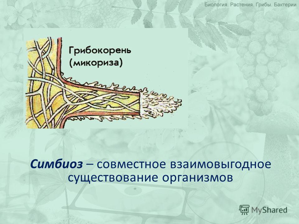 Симбиоз – совместное взаимовыгодное существование организмов