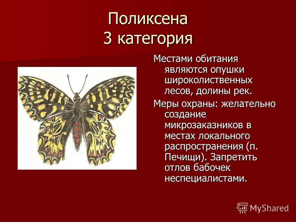 Поликсена 3 категория Местами обитания являются опушки широколиственных лесов, долины рек. Меры охраны: желательно создание микрозаказников в местах локального распространения (п. Печищи). Запретить отлов бабочек неспециалистами.