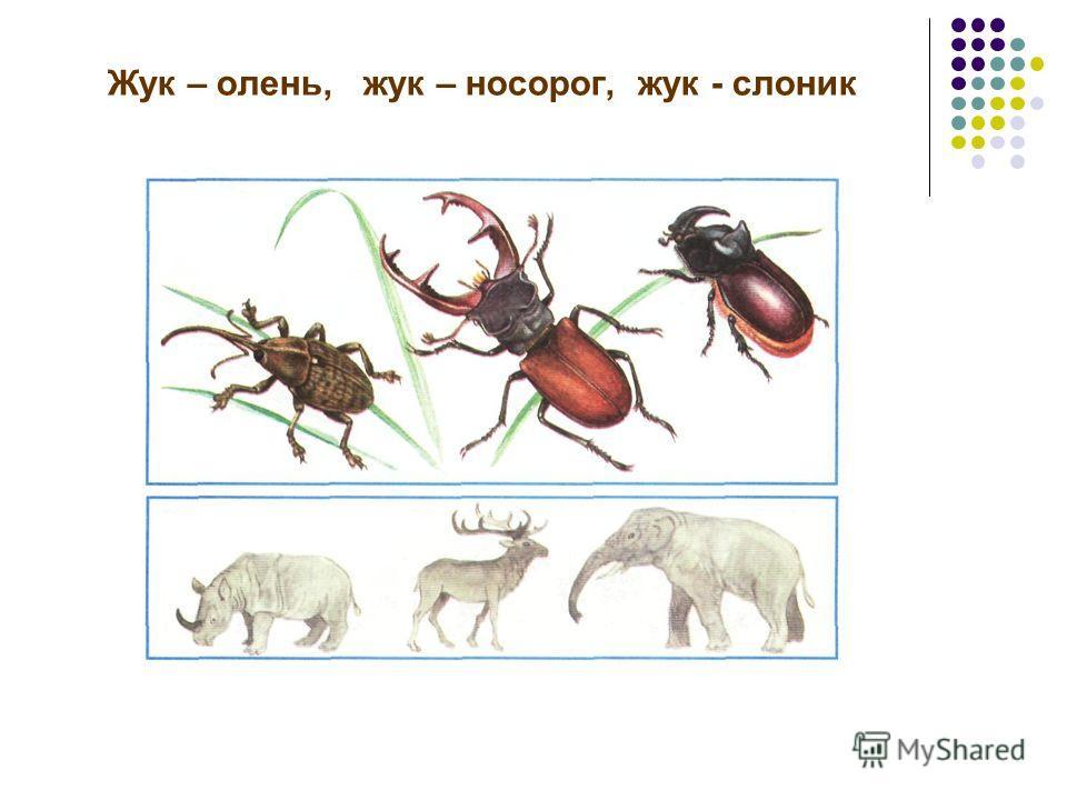 Жук – олень, жук – носорог, жук - слоник