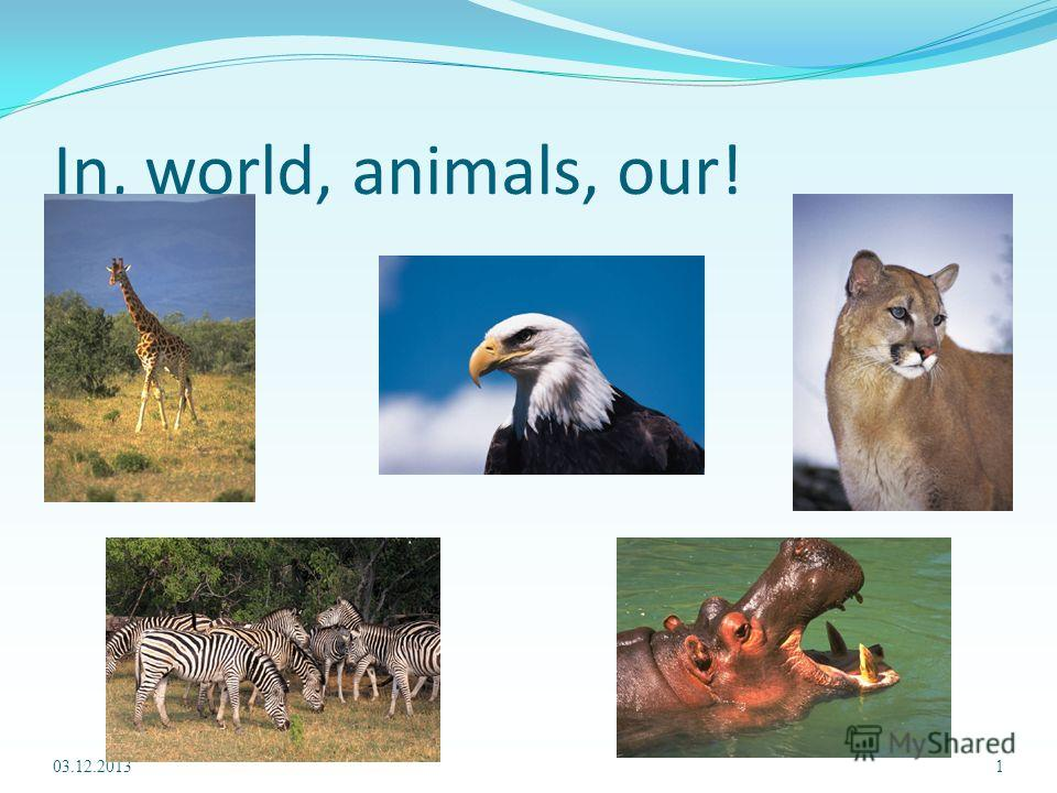 In, world, animals, our! 03.12.20131