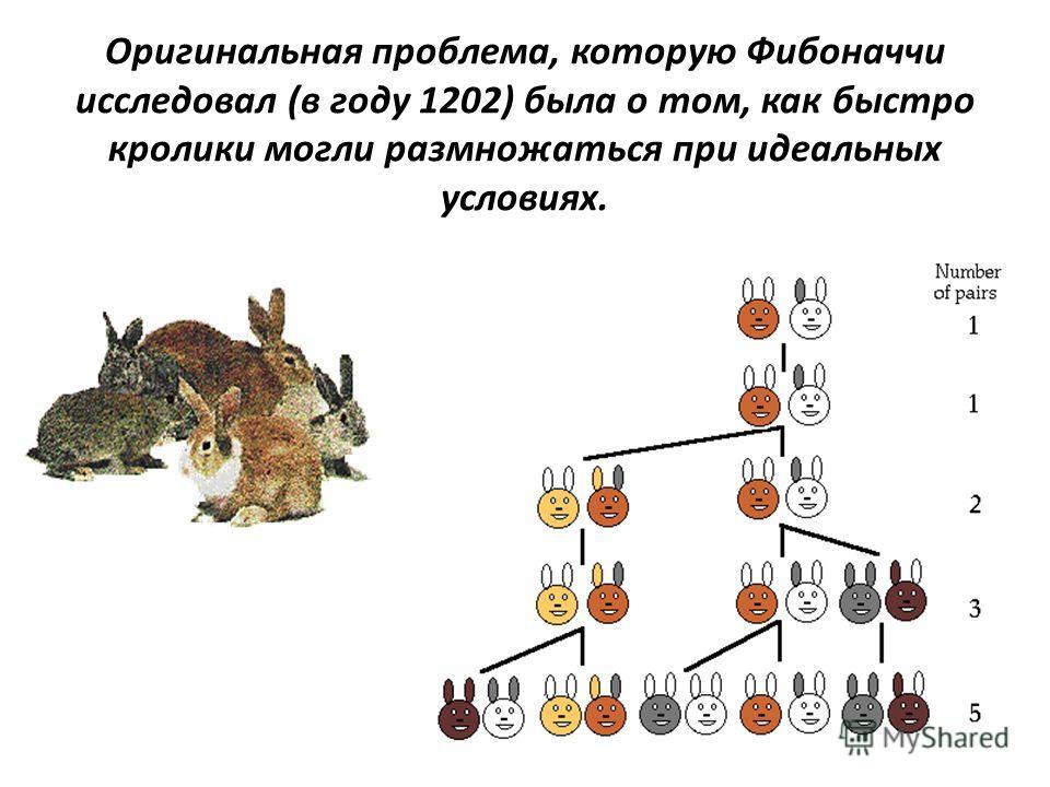 Оригинальная проблема, которую Фибоначчи исследовал (в году 1202) была о том, как быстро кролики могли размножаться при идеальных условиях.
