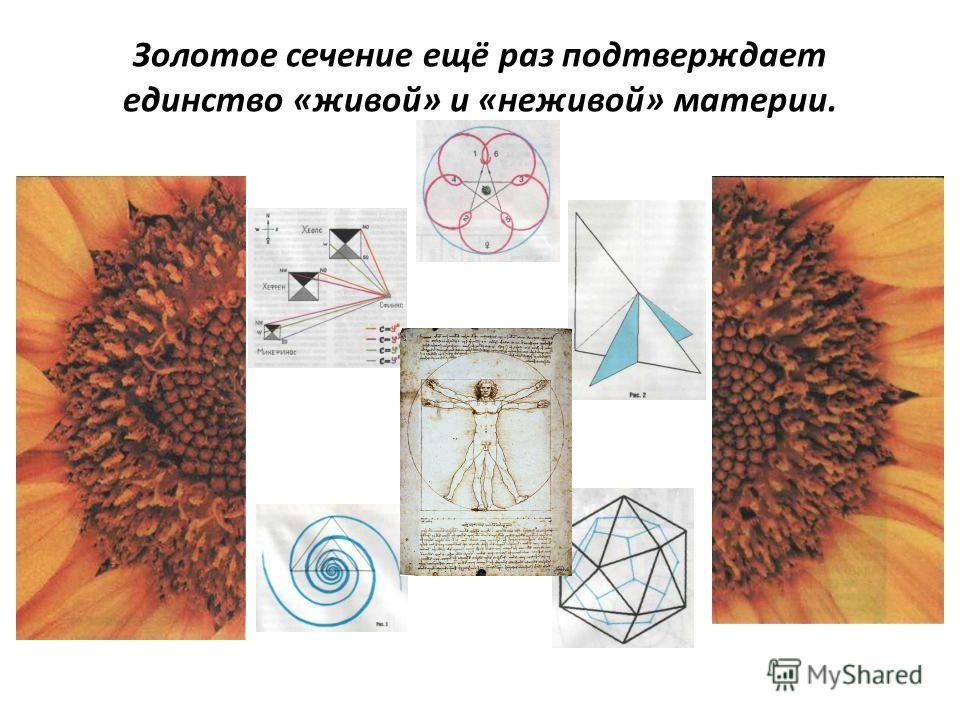 Золотое сечение ещё раз подтверждает единство «живой» и «неживой» материи.