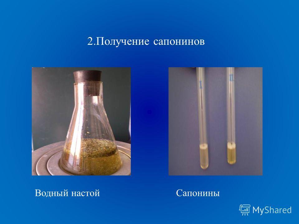 2.Получение сапонинов Водный настойСапонины