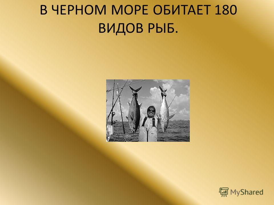 В ЧЕРНОМ МОРЕ ОБИТАЕТ 180 ВИДОВ РЫБ.