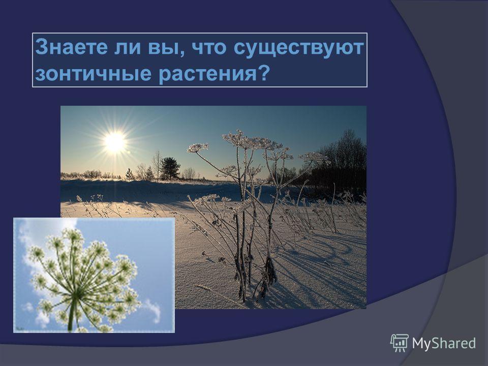 Знаете ли вы, что существуют зонтичные растения? существуют зонтичные растения?