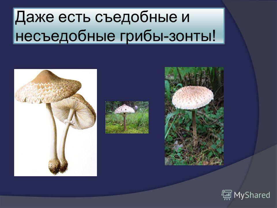 Даже есть съедобные и несъедобные грибы-зонты!