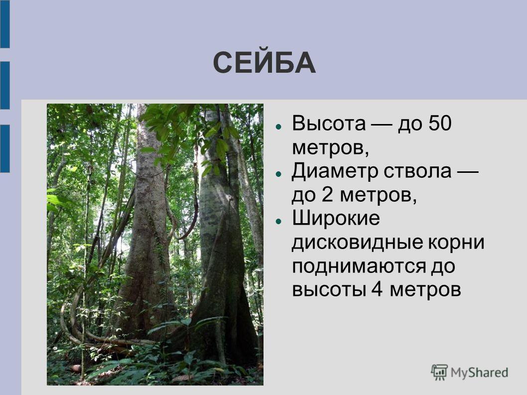 СЕЙБА Высота до 50 метров, Диаметр ствола до 2 метров, Широкие дисковидные корни поднимаются до высоты 4 метров