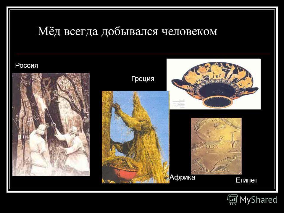Мёд всегда добывался человеком Россия Африка Греция Египет