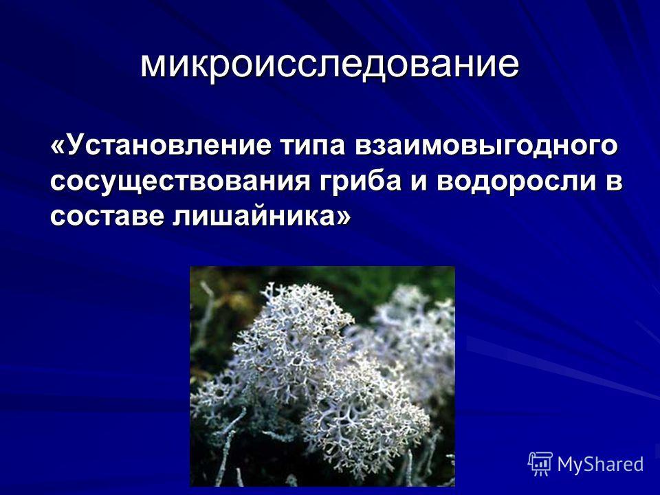 микроисследование «Установление типа взаимовыгодного сосуществования гриба и водоросли в составе лишайника»
