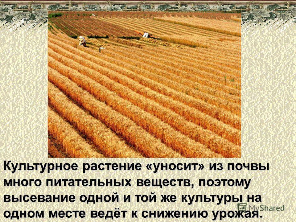 Культурное растение «уносит» из почвы много питательных веществ, поэтому высевание одной и той же культуры на одном месте ведёт к снижению урожая.