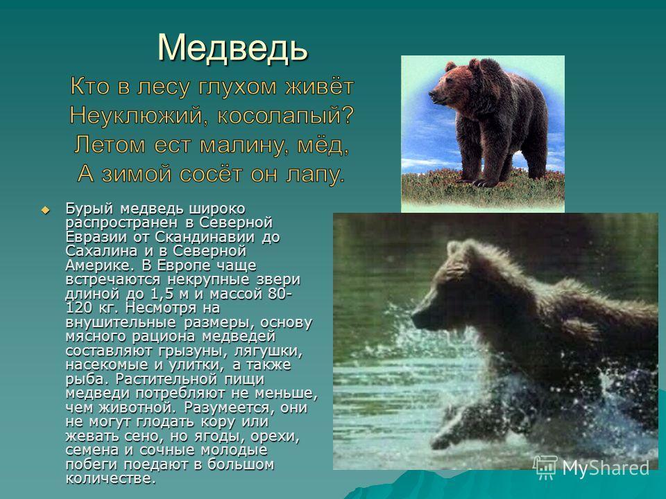 Медведь Бурый медведь широко распространен в Северной Евразии от Скандинавии до Сахалина и в Северной Америке. В Европе чаще встречаются некрупные звери длиной до 1,5 м и массой 80- 120 кг. Несмотря на внушительные размеры, основу мясного рациона мед