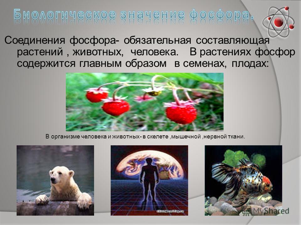Соединения фосфора- обязательная составляющая растений, животных, человека. В растениях фосфор содержится главным образом в семенах, плодах: В организме человека и животных- в скелете,мышечной,нервной ткани.