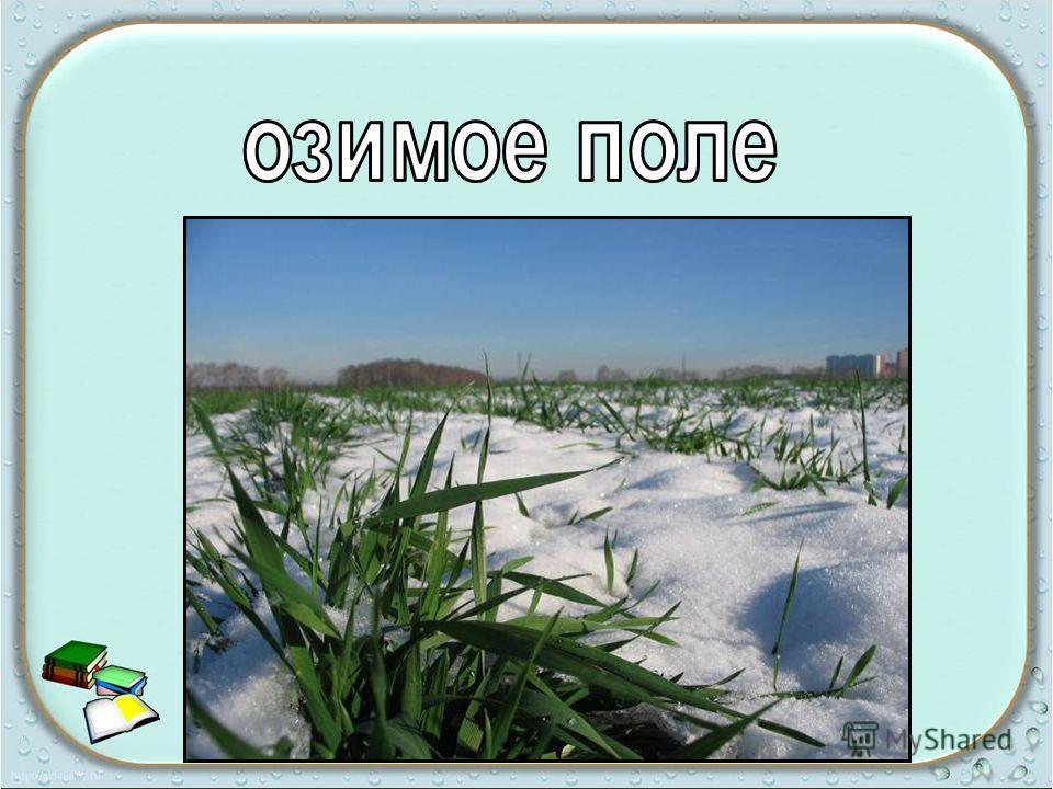 октябрьский снег Робок и тих; для красоты; белый и лёгкий;