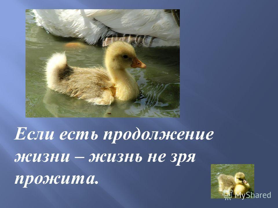 Если есть продолжение жизни – жизнь не зря прожита.