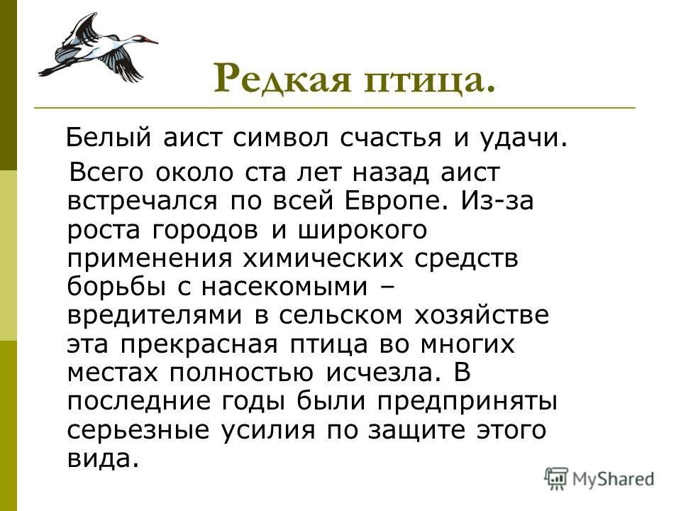 Белый аист символ счастья и удачи. Всего около ста лет назад аист встречался по всей Европе. Из-за роста городов и широкого применения химических средств борьбы с насекомыми – вредителями в сельском хозяйстве эта прекрасная птица во многих местах пол