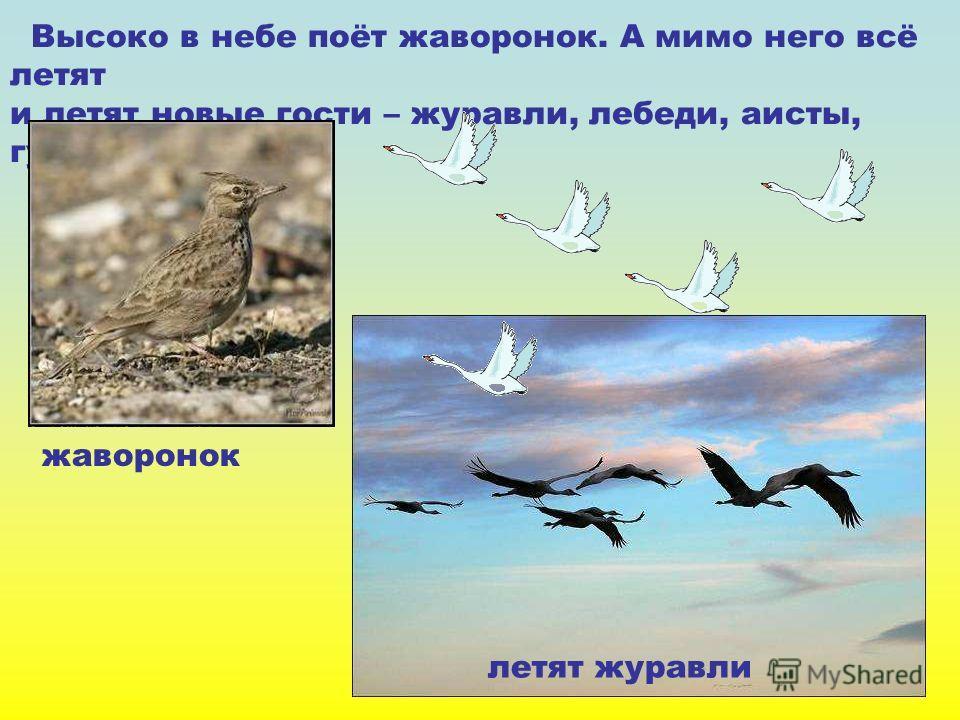 Высоко в небе поёт жаворонок. А мимо него всё летят и летят новые гости – журавли, лебеди, аисты, гуси. жаворонок летят журавли Высоко в небе поёт жаворонок. А мимо него всё летят и летят новые гости – журавли, лебеди, аисты, гуси. Жаворонок. Летят ж