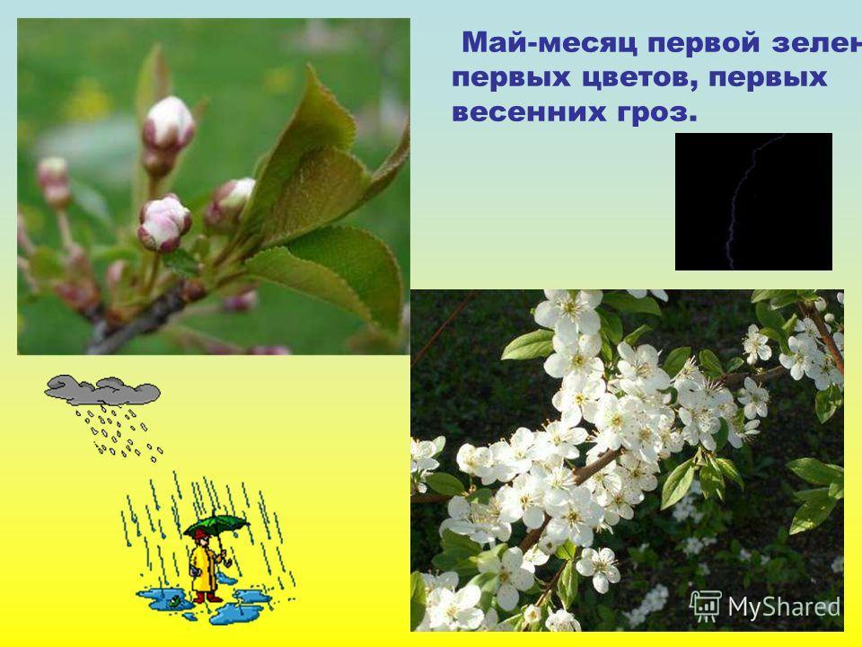 Май-месяц первой зелени, первых цветов, первых весенних гроз. Май-месяц первой зелени, первых цветов, первых весенних гроз.